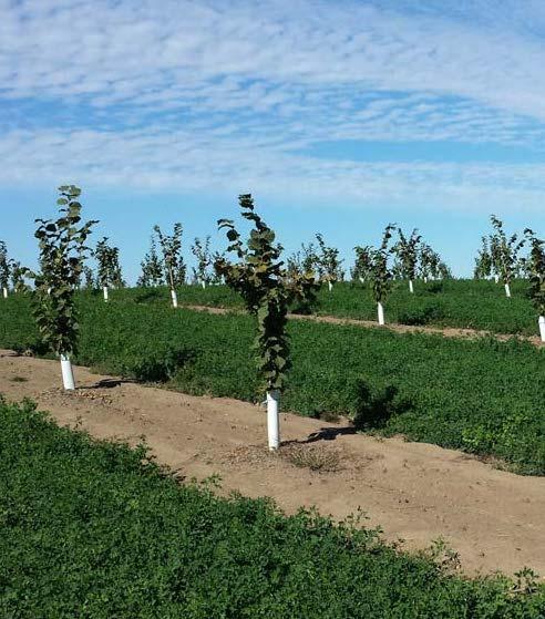 Progetti di smart farming
